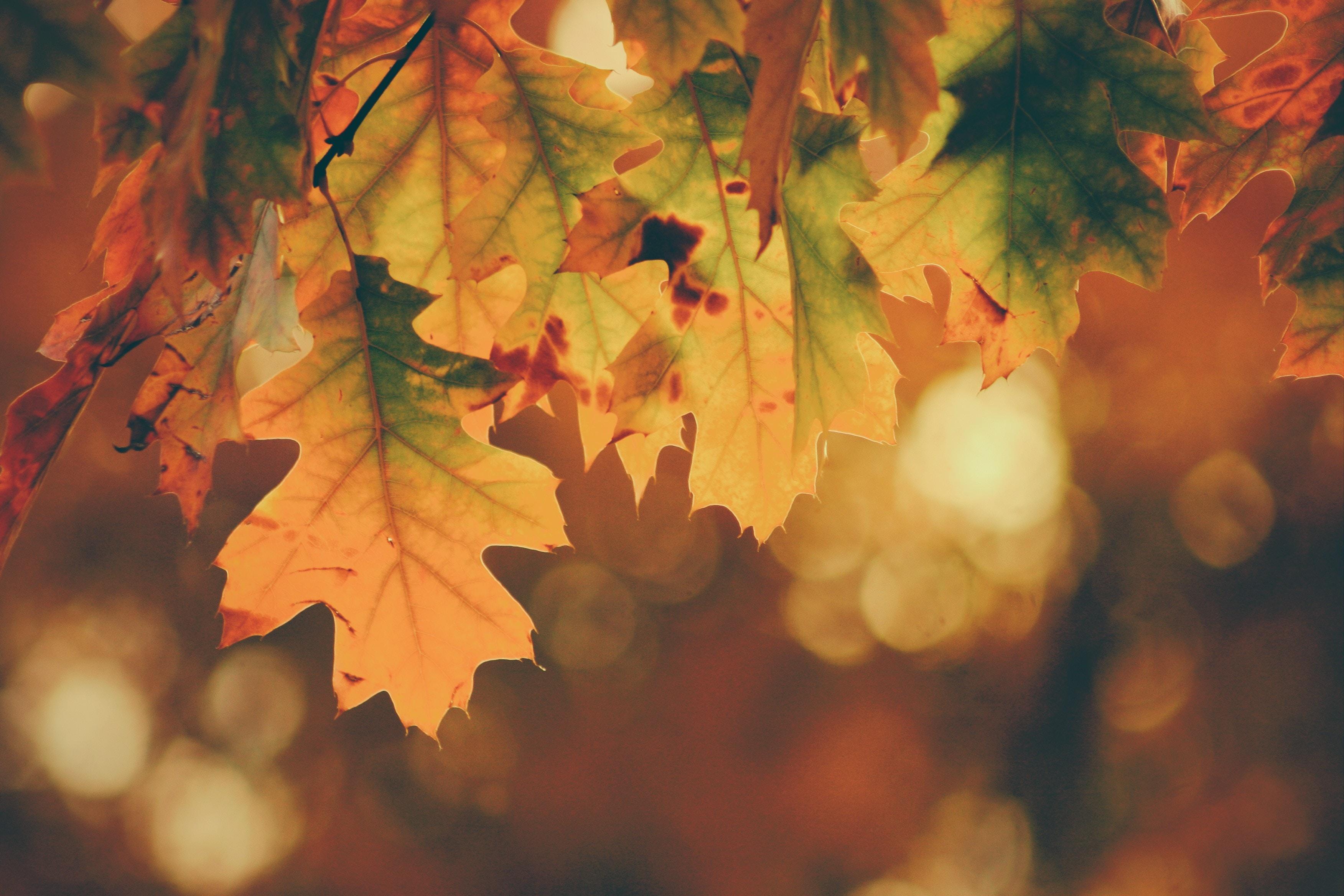 28η Οκτωβρίου: 5 ιδανικοί προορισμοί για απόδραση το τριήμερο